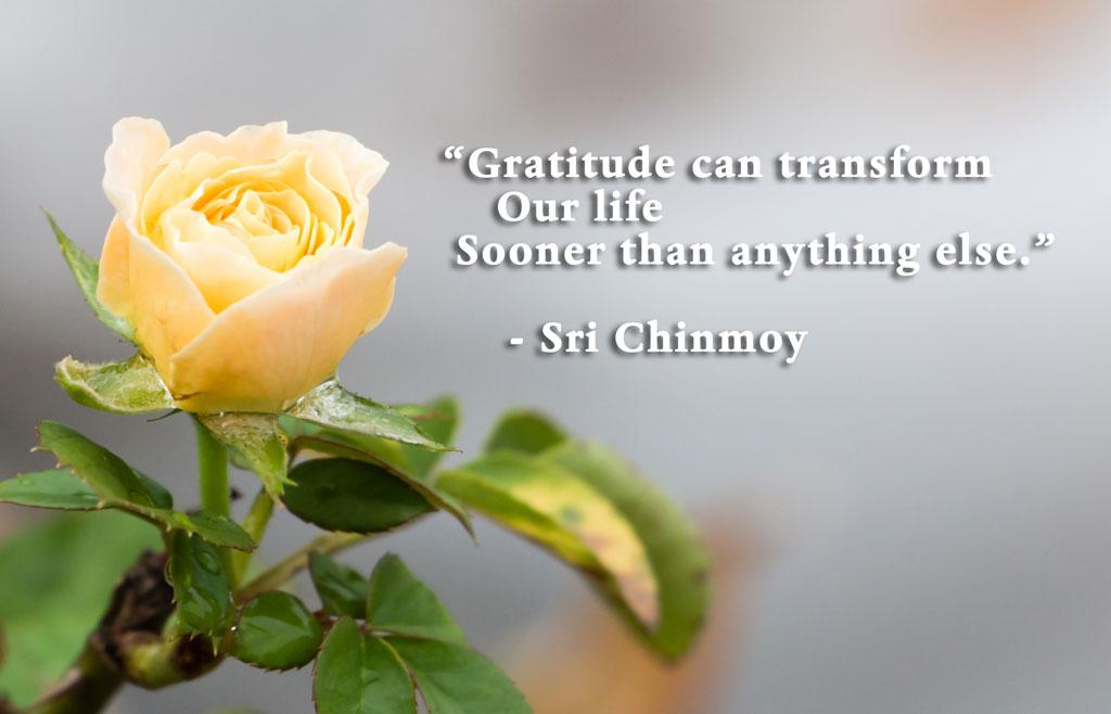 gratitude-transform