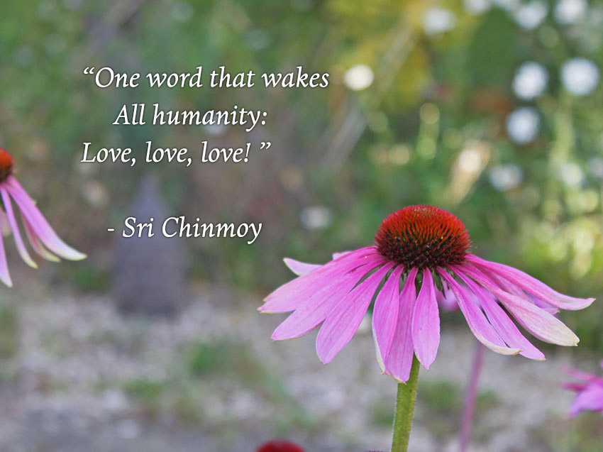one-word-wakes-humanity-love