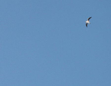 sky-bird